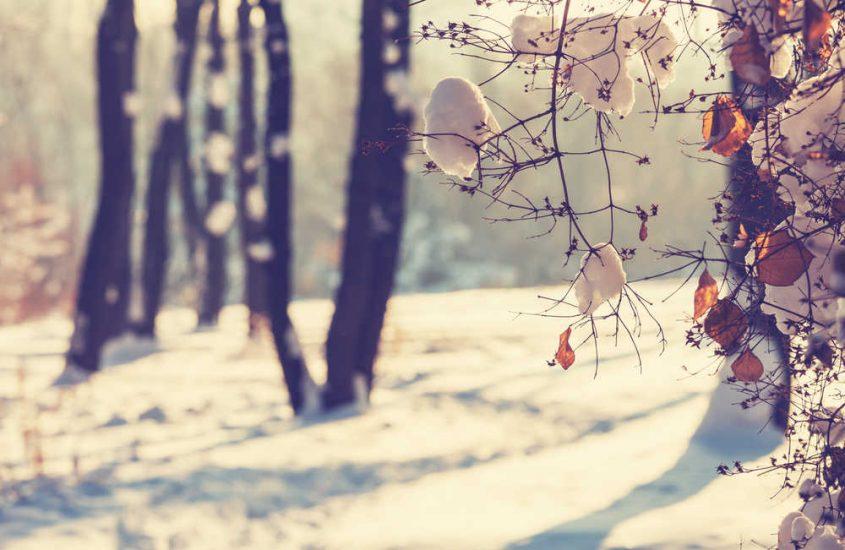Vivre une fin d'hiver en douceur