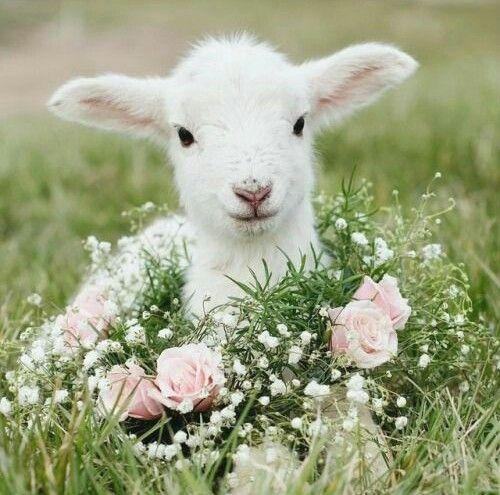 prendre soin de soi brin d herbe la force de la douceur