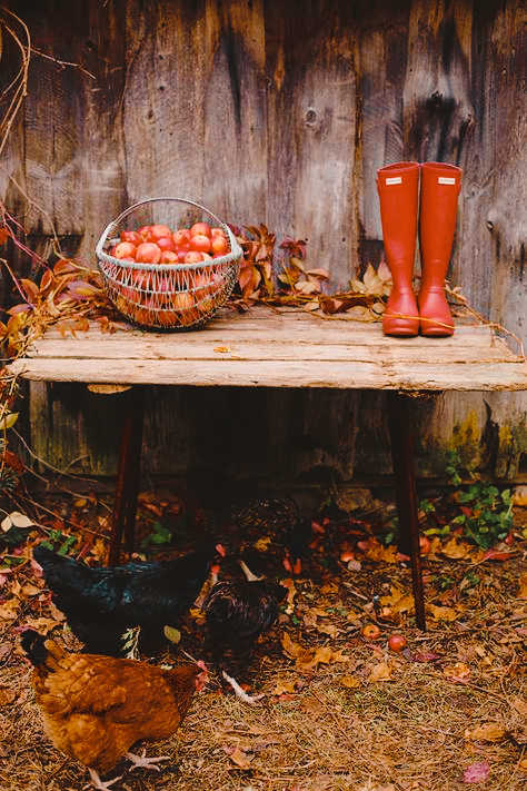 automne rouge brin dherbe