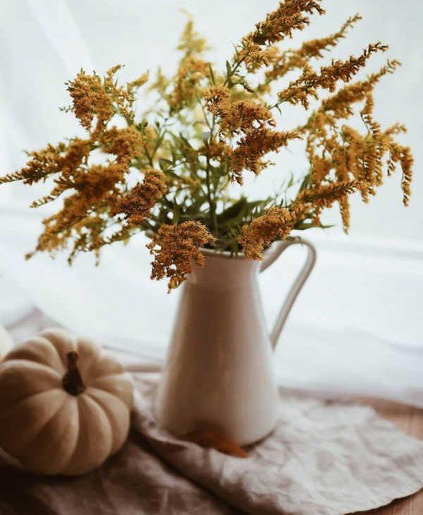 douceur automne brin dherbe